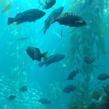 kelp forest_Heike