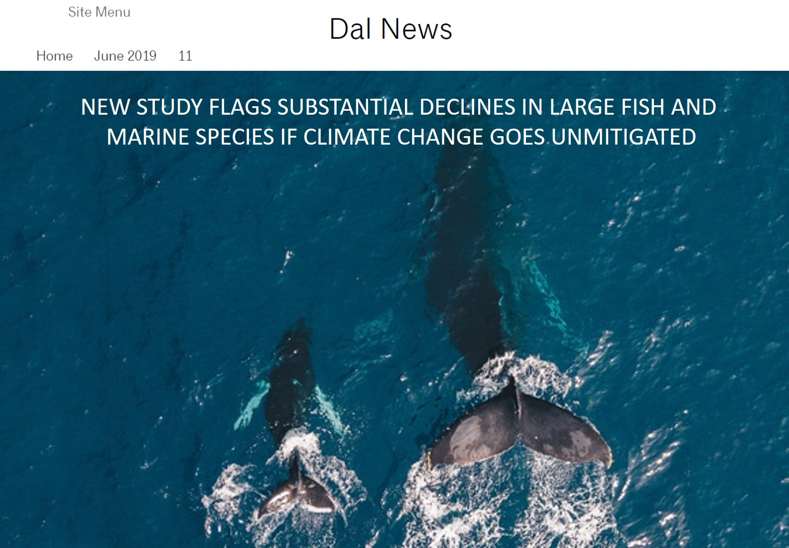 FishMIP_June 2019_Dal news